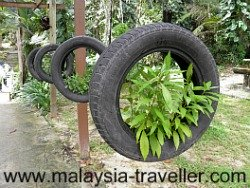 That's what I call a rubber plant!
