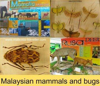 Museum Of Nature, Putrajaya