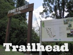 Pine Tree Hill Trail trailhead