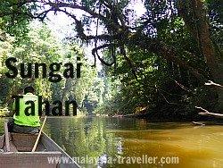 Beautiful Sungai Tahan at Taman Negara