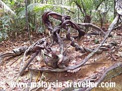 Natural Art at Taman Negara