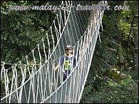 Top Selangor Attractions FRIM