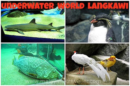 Creatures at Underwater World