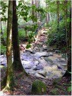 Malaysia Jungle Walk