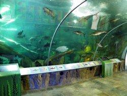 Aquarium at Science Museum, KL